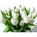 Тюльпаны (21 шт)