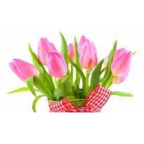 Тюльпаны (5 шт)