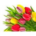 Тюльпаны (101 шт)